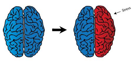 gestresste en ontspannen hersenen